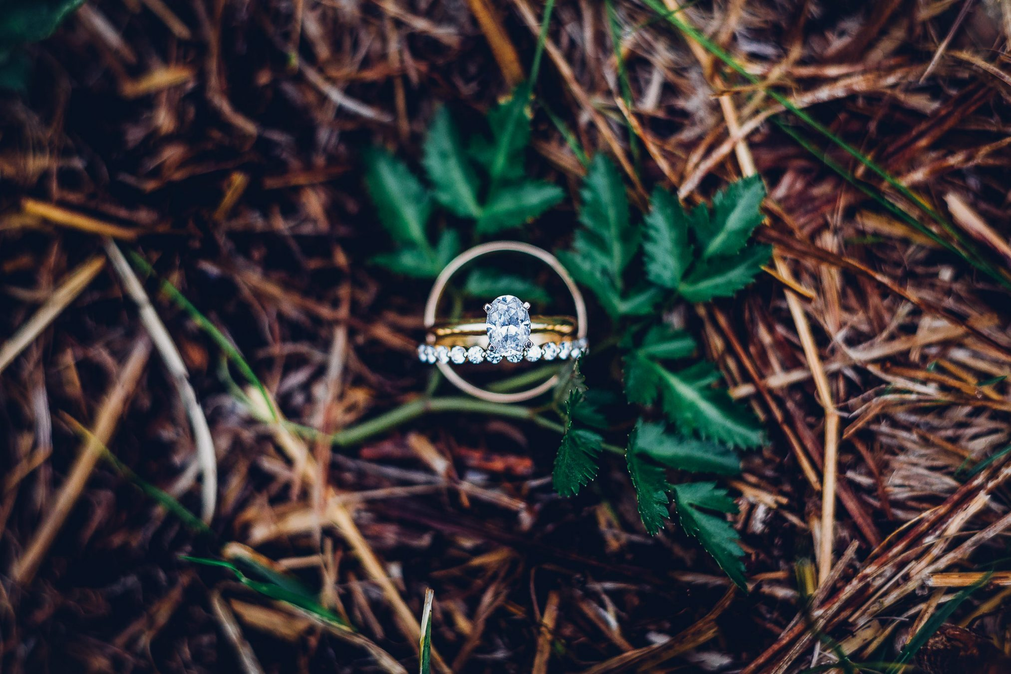 Laurel Falls Asheville Wedding